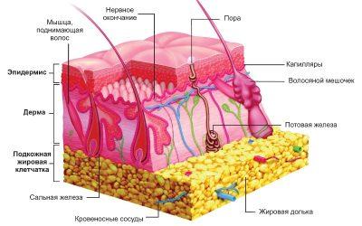 Анестезия для татуажа при эпиляции